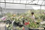 亞洲第一 「草莓族」打造世界級保種中心
