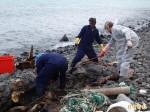 澎湖發現鯨豚擱淺死亡 送成大學術研究
