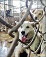 流浪狗減量 台南家犬擬納節育補助