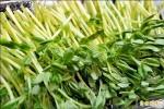 9成7芽菜生菌超標 最好別生食