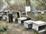 捍衛西瓜王國 二崙補助蜜蜂授粉