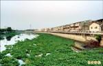 嘉南大圳布袋蓮滿河道 拖半月還沒清