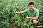 頭份設產銷班》休耕轉作黑豆 收益高過種稻