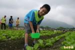 拔草整地 小農夫呵護芥菜幼苗