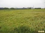 高市山區連續強降雨 造成農損170萬