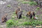 台東猴害嚴重 將補助農民設圍網