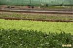一週豪雨 全台農損超過六百萬元