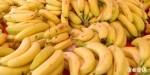 苗栗營養午餐頻出包!拿香蕉差點拿到鼠屍
