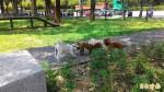 高市首座寵物公園完工啟用 週日將辦同樂會