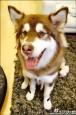 亞洲首富獨子 愛犬戴蘋果錶