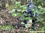 潑猴攻擊騎士 消防員追捕也被咬
