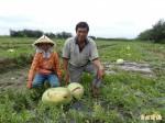 5月豪雨農業災損 逾3千萬元