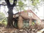 移植老樹當門面 反對者:原地保護