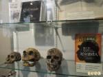 清大保種中心 可見隕石化石上百物種
