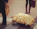 不可思議!日本街頭出現「龜仙人」?