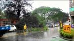 瞬間強降暴雨 殃及人、魚、樹