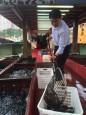 屏東活魚銷港搶手 縣長潘孟安登運搬船體驗