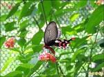 潭子國小 打造蝴蝶遊樂園