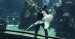 最可愛鯊魚!學「小狗」向潛水員微笑撒嬌
