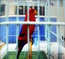 原會說阿彌陀佛 鸚鵡遭竊嚇成啞巴