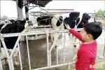 初鹿牧場徵實習場長 日薪1萬元包吃包住