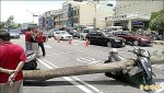 黑板樹倒塌 打中騎機車孕婦