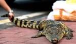 「鱷」作劇之吻!公司徵才吻鱷成必考題