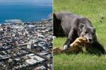 狗狗伴屍一個月 疑似吃掉主人屍體雙腿