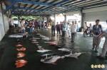 蓮花颱風進逼 台東富岡漁市場漁獲銳減5成