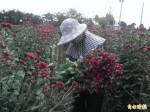 熱熱熱!花卉受不了量少 價揚2至3成