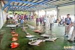 颱風逼近 富岡漁市漁獲砍半