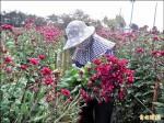 熱死了!花卉減產 漲價約二成