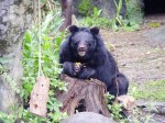 《TAIPEI TIMES 焦點》 Taipei Zoo management panned after bear attack