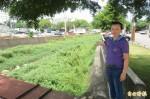 台中東大溪南邊溪野草滿布 居民憂颱風來襲淹水
