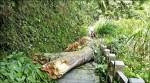 《天空步道試營運》 登山步道枯木砸死婦