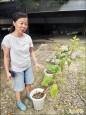 實習農園種菸葉 北農學子很好奇