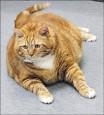 18.6公斤橘貓 瘦身有成萌翻了
