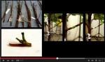 一棵樹有40種水果...超級果樹誕生!