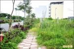 竹南大埔都計區 雜草吞人行道 垃圾堆置