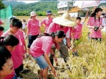 學童種稻 收割米當營養午餐