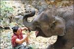 〈實現我的旅遊夢〉照顧大象記─清邁一週志工行