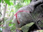 美臀樹穿小丁 信義公所將「脫掉」