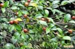 茶油樹產銷班 要打響竹縣品牌