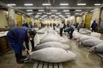 生魚片變便宜?日本TPP談判 擬取消黑鮪魚關稅