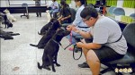宜蘭防疫所找教授開課 流浪狗變溫馴