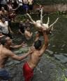 這是傳統還是殘忍? 尼泊爾慶典活撕山羊!