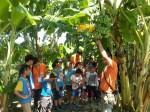 崇青社翻轉教室教學!餵牛、採香蕉樣樣來