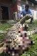 因攻擊村民 瀕危印度豹被打死後還遭焚屍