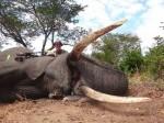 又一美國醫生涉嫌非法獵殺 網路秀出獵物照
