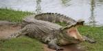 別小看媽媽!印度主婦鍋碗瓢盆擊退巨鱷